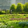 Lurie Garden at Millennium Park
