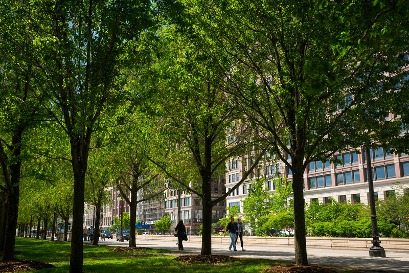 View of Michigan Avenue through the trees from Millennium Park