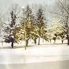 Snowy Grounds I (03309)