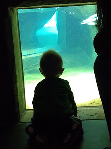 Penguin watch at National Aviary