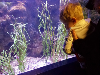 watching the seahorses