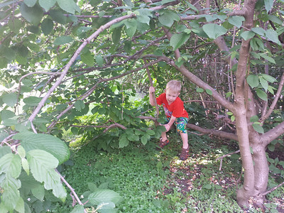 Backyard tree climbing