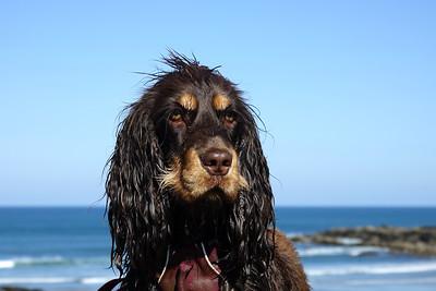 Rupert - Wet dog