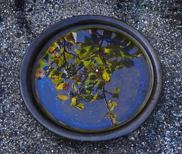 Rosemary - Cat's water