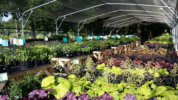 Scottsdale Farms Milton GA Plant Nursery (19)