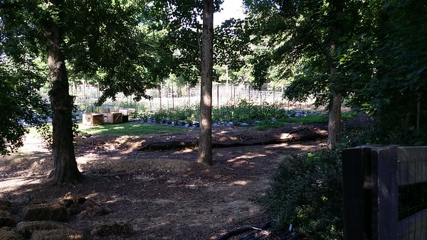 Scottsdale Farms Milton GA Plant Nursery (21)
