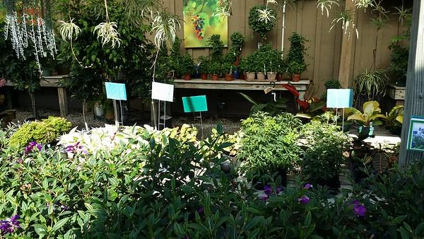Scottsdale Farms Milton GA Plant Nursery (18)