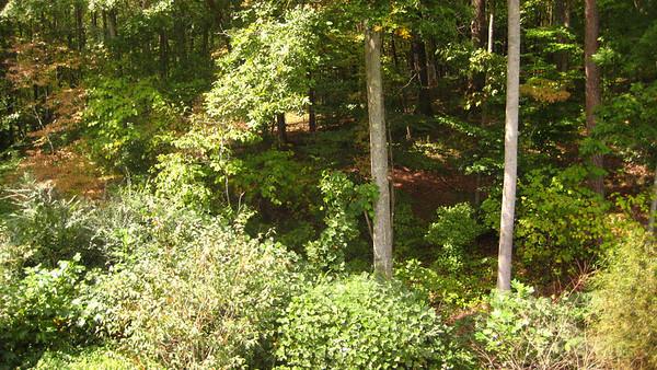 Creek Crossing Estate Homes Milton GA (13)