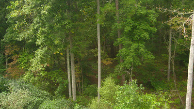 Creek Crossing Estate Homes Milton GA (23)