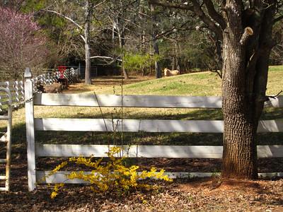 Sunnybrook Farms Equestirian Community 30004 (11)