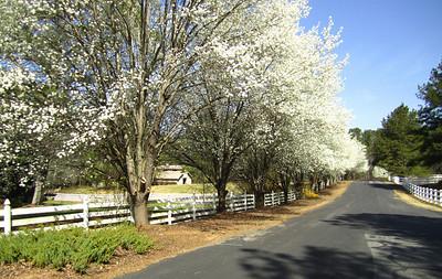 Sunnybrook Farms Equestirian Community 30004 (5)