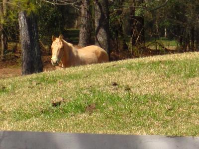 Sunnybrook Farms Equestirian Community 30004 (14)