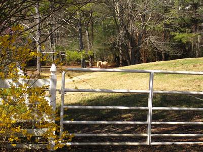 Sunnybrook Farms Equestirian Community 30004 (10)