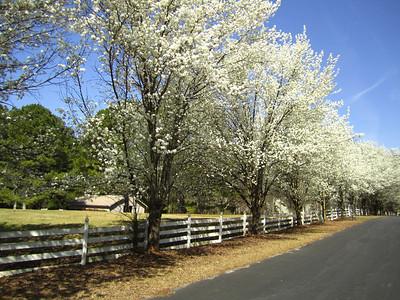 Sunnybrook Farms Equestirian Community 30004 (17)