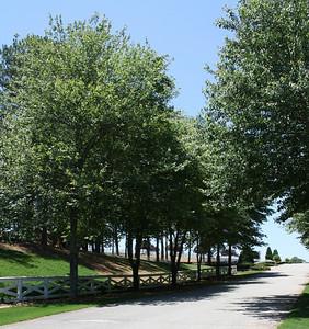 Tullamore Estates Milton GA (12)