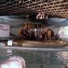 marineland_trip_zoo_0008_a
