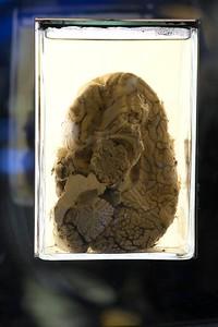 Mind Gap - Exhibition Design, Norwegian Museum of Science, Oslo, 2011
