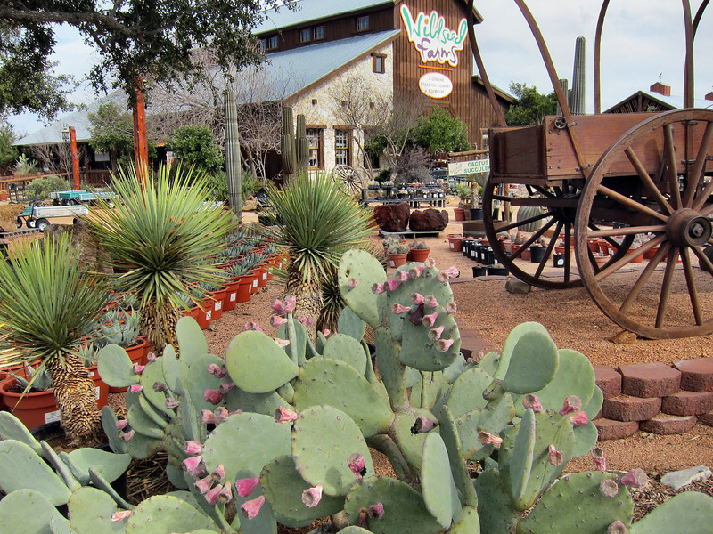 Wild Seed Farm in Fredricksburg, Texas.