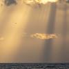 Sjøfugler høyt og lavt / Sea birds high and low<br /> Madeira, Portugal 29.6.2018<br /> Canon 5D Mark IV + 100-400mm f/4.5-5.6L IS II USM + 1.4x