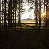 Grind mellom skog og åker<br /> Tyrifjorden, Ringerike 14.7.2021<br /> Canon EOS R5 + EF 17-40mm f/4L USM @ 35 mm