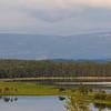 Karlsrudtangen, Ringerike 14.7.2021<br /> Canon EOS R5 + EF 100-400mm f/4.5-5.6L IS II USM @ 153 mm