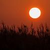 Solnedgang i oasen