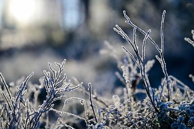 Skumsjøen   29/11/2020    --- Foto: Jonny Isaksen