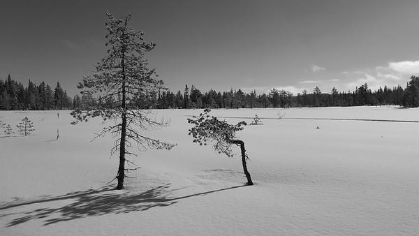 Eikvelta  03/03/2017   --- Foto: Jonny Isaksen