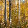 Biri 13/10/2013   --- Foto: Jonny Isaksen