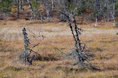 Fjortentjernsmyrene  07/10/2018   --- Foto: Jonny Isaksen