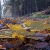 Biri  20/10/2013   --- Foto: Jonny Isaksen