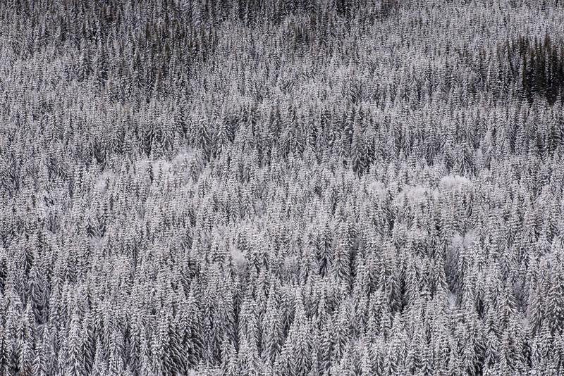 Biri  21/11/2015   --- Foto: Jonny Isaksen
