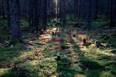 Biri  25/10/2015   --- Foto: Jonny Isaksen