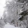 Biri 26/12/2014   --- Foto: Jonny Isaksen