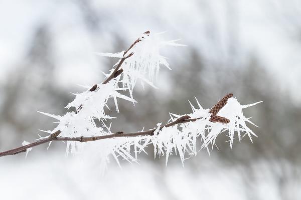 Fjortentjernsmyrene  16/03/2019   --- Foto: Jonny Isaksen