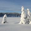 Redalssetermyra / Grindlirunden 28/12/2009   /   Foto: Jonny Isaksen