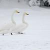 Reinsvoll  25/12/2012   --- Foto: Jonny Isaksen