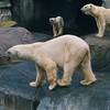 København Zoo 1999   --- Foto: Jonny Isaksen