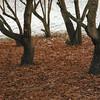 Biri 24/12/2006   --- Foto: Jonny Isaksen