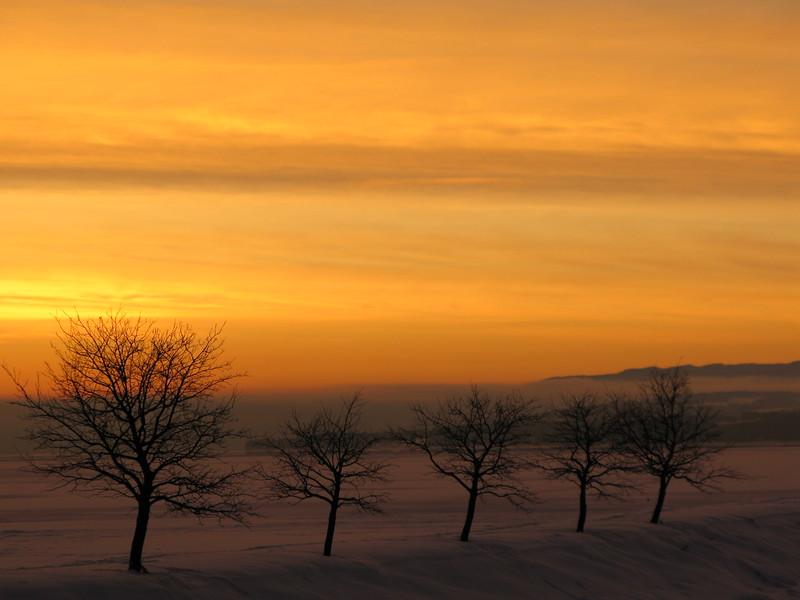 Gjøvik 26/01/2010   --- Foto: Jonny Isaksen