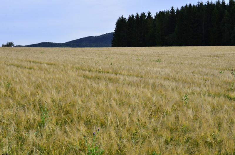 Biri 29/08/2012   --- Foto: Jonny Isaksen