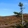 Skjervungfjellet 11/10/2010     ----- Foto: Jonny Isaksen
