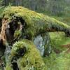 Biri 26/10/2008   --- Foto: Jonny Isaksen