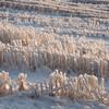 Biri 27/12/2014   --- Foto: Jonny Isaksen