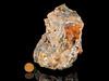 Galena, Quartz & Calcite in silicified dolostone, Presidio County, Texas