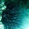Rottness Dive-31