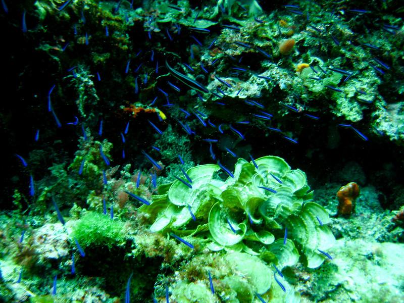 Rottness Dive-12