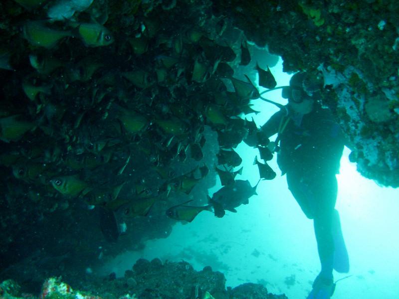 Rottness Dive-15