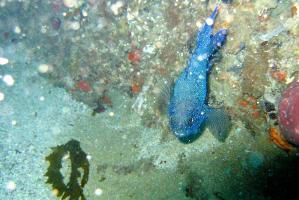 Rottness Dive-17