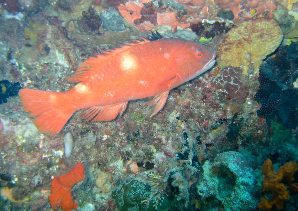 Rottness Dive-28